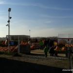 Wejście na Farmę Dyń