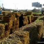 Labirynt z siana na Farmie Dyń w Powsinie