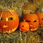 Farma dyń w Powsinie – od 10 września do 30 października. Śpieszcie się.