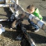 Króliki na Farmie Dyń w Powsinie