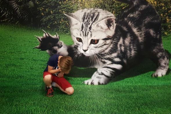 Iluzja Selfie w PKIN - kot