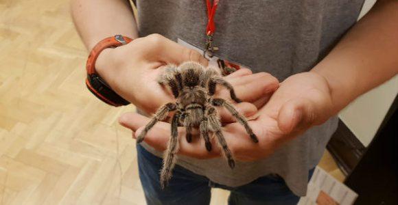 Wystawa pająków w PKIN