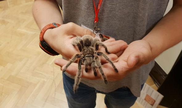 Wystawa pająków i skorpionów w PKiN