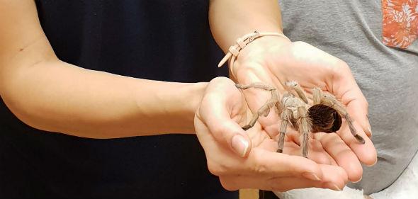 trzymanie pająka