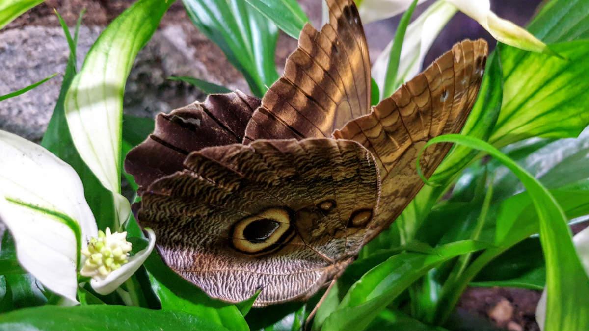 Motylarnia w Galerii Północnej wielkie motyle