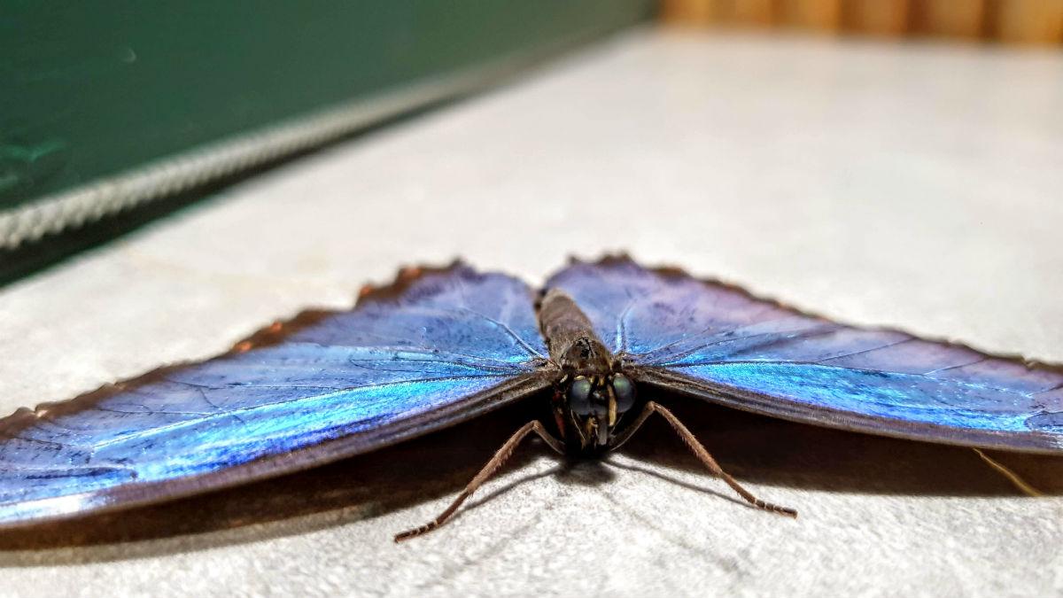 Motylarnia w Galerii Północnej motyl z bliska