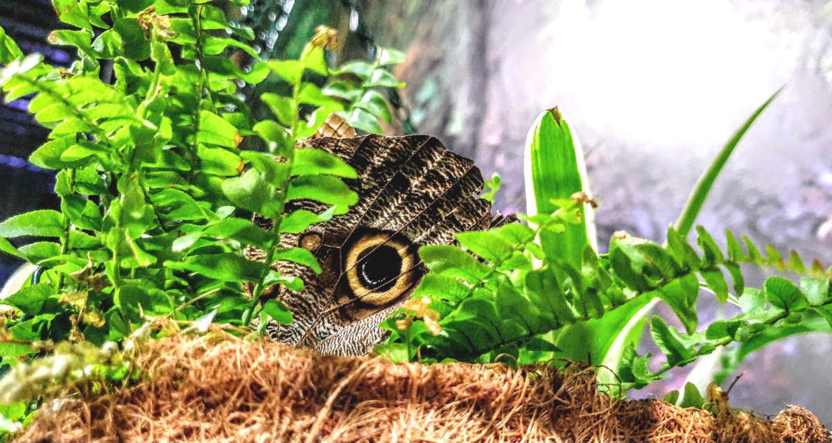 Motylarnia w Galerii Północnej motyl