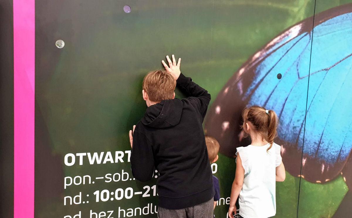 Motylarnia w Galerii Północnej - podgląd na żywo