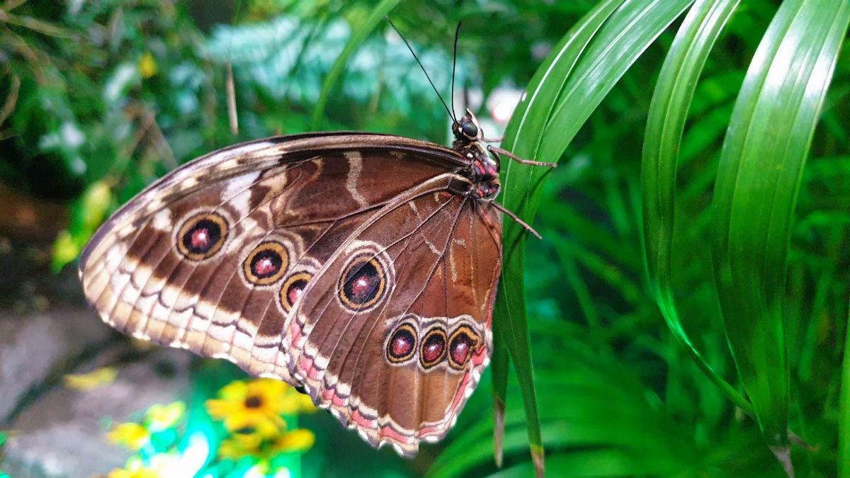 Motylarnia w Galerii Północnej piękny motyl