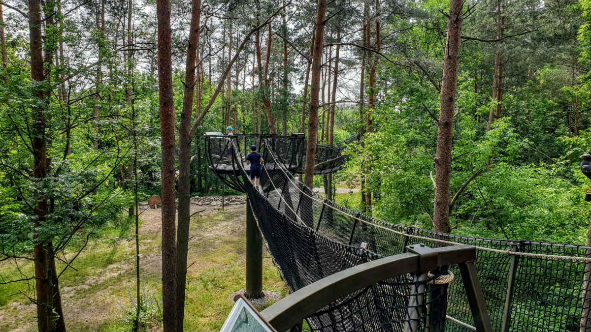spacer w koronach drzew Ścieżka edukacyjna w Pomiechówku _