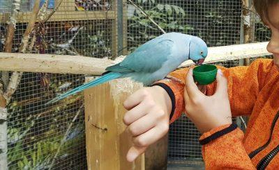 Papugarnia Marywilska 44