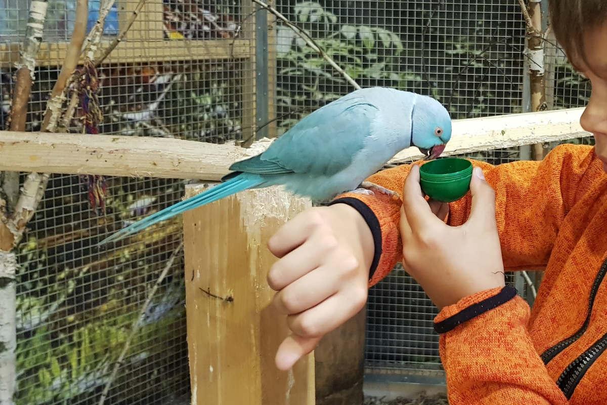 Papugarnia Marywilska 44. Carmen rośnie w siłę