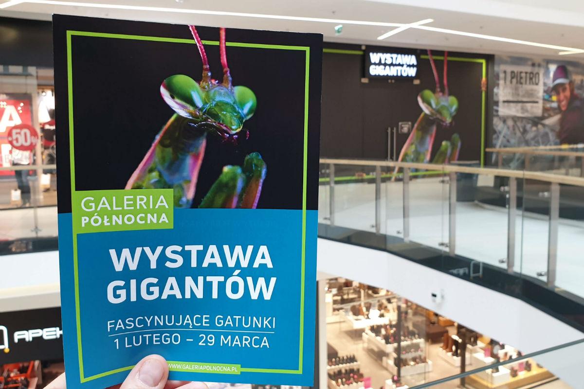 """Wystawa bezkręgowców w Galerii Północnej – """"Wystawa Gigantów"""""""