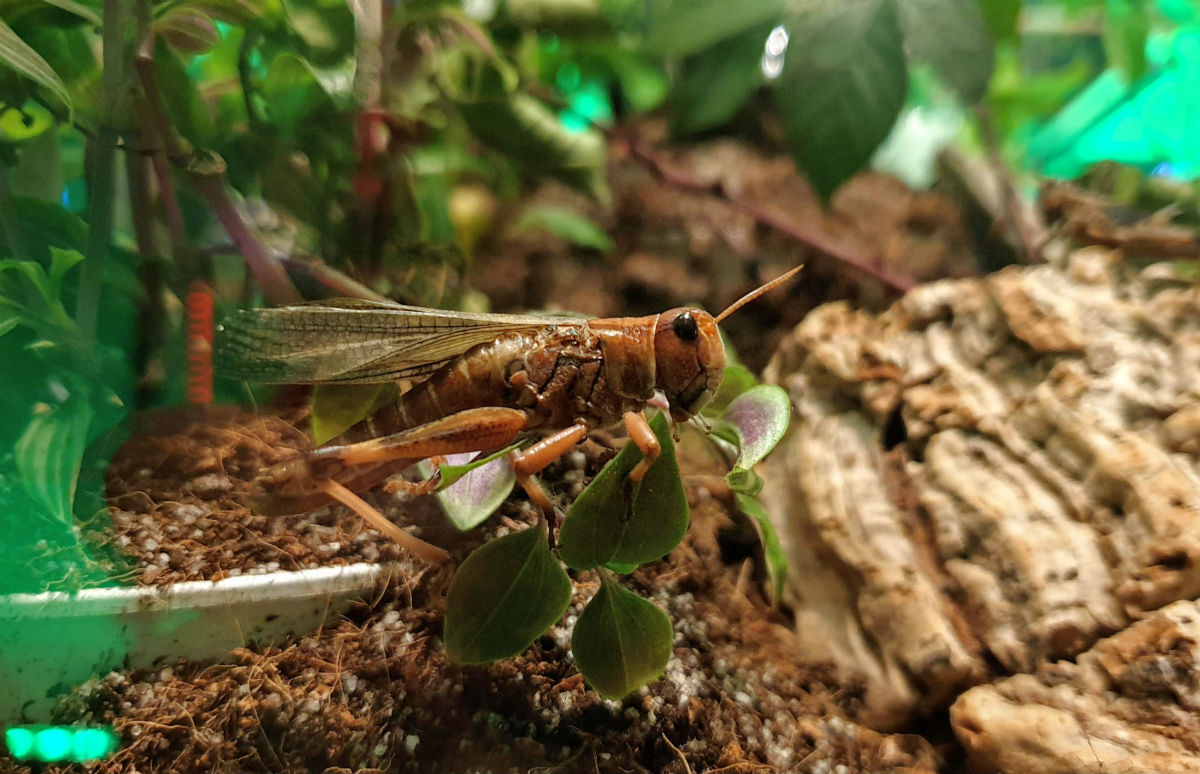 Wystawa owadow w Galerii Północnej
