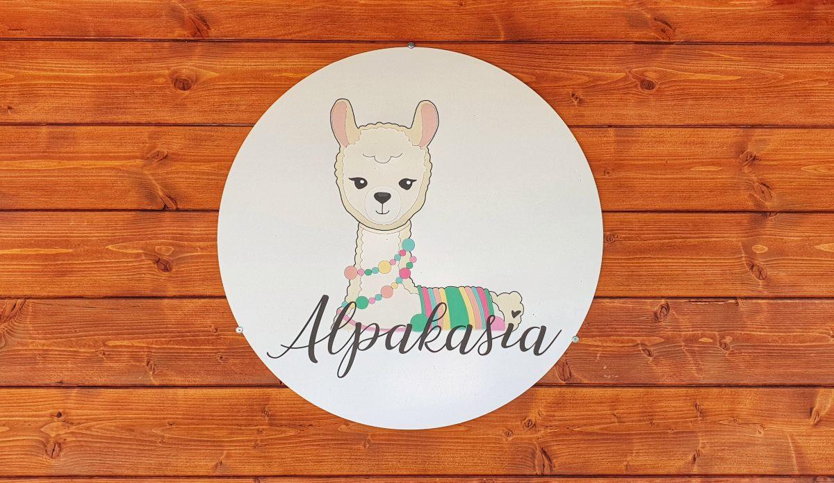warsztaty z alpakami w Alpakasia